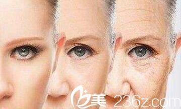 皮肤胶原蛋白流失过程