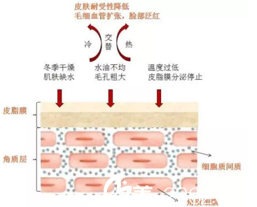 红血丝分布图