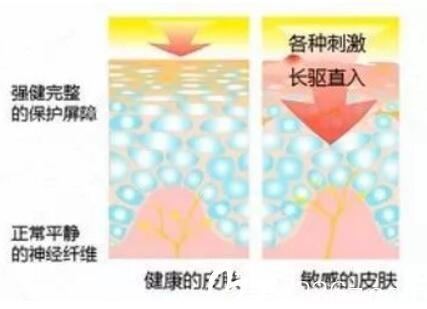 正常皮肤与敏感肌的对比