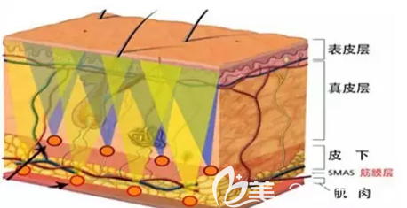 皮肤层次的解剖