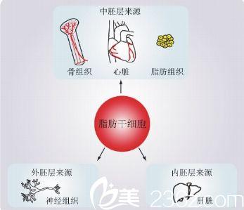 湖北省中医院脂肪干细胞