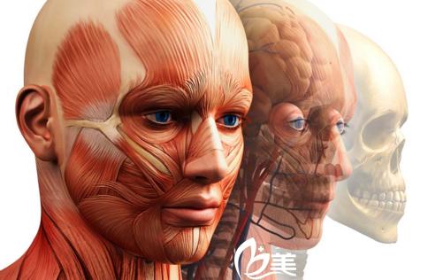 双鄂修复手术——韩国id医院—骨骼肌肉组织