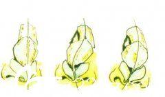 较常见的几种歪鼻
