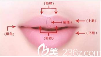 理想唇形示意图