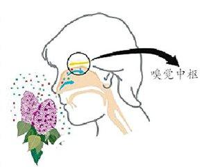 隆鼻会影响人的嗅觉