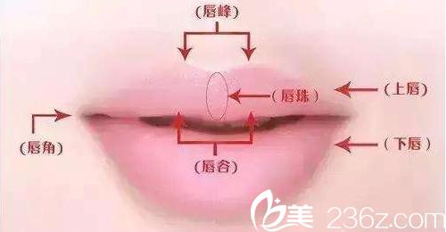 北京知音整形医院美唇示意图