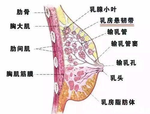 自体脂肪填充胸部