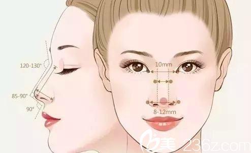 好看的鼻子的美学标准