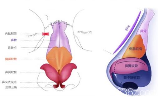 北京长虹鼻部结构示意图