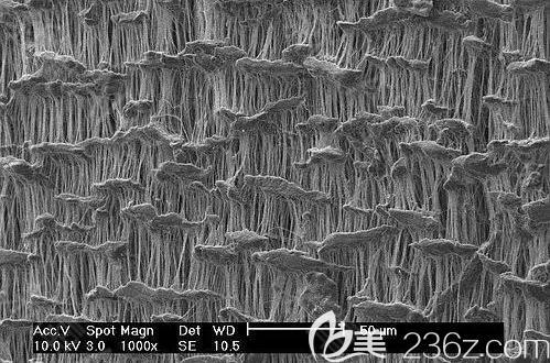 膨体材料在显微镜下的观察结果