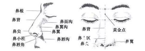 鼻部结构示意图