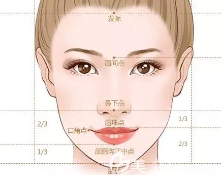 精致的面部轮廓示意图