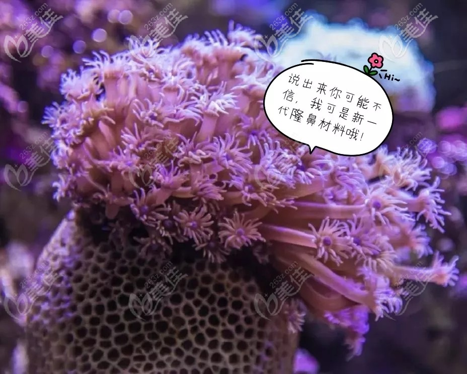 珊瑚骨隆鼻是什么材料