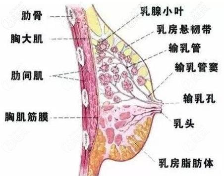 上海仁爱假体隆胸动画图示