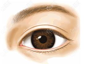 富有双眼皮的眼睛示意图