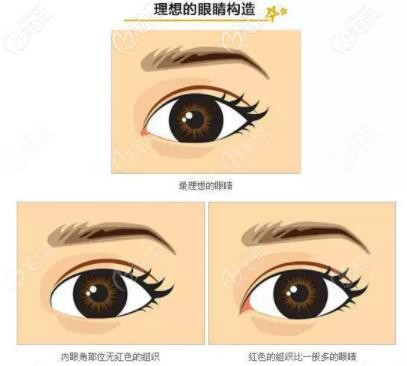 理想的眼睛构造图