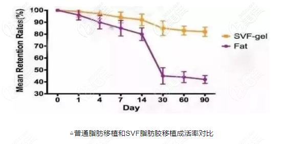 svf脂肪细胞的成活率比普通脂肪高的多