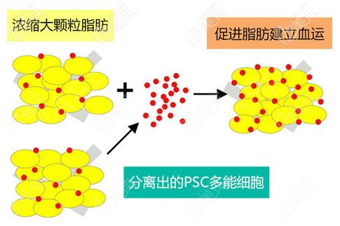 分离出更多PSC多能细胞