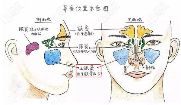 头骨组织结构图